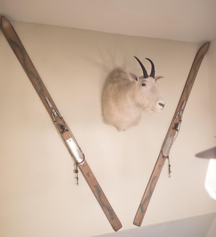 colchucks-goat